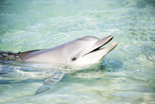 Dolphin Saying Hello