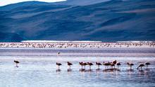 Bolivia Pink Lagoon