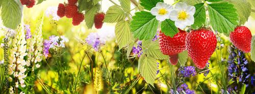 Photo  garden strawberry and raspberry