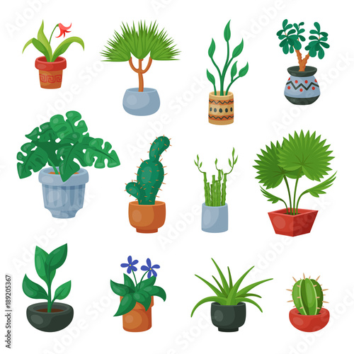 Plants In Flowerpots Vector Potted Flowery Houseplants For Interior