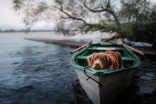 Nova Scotia Duck Tolling Retriever In The Boat