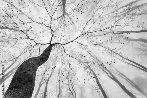 Fototapeta Spring tree crown obraz