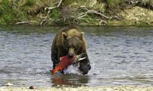 A Voracious Giant Brown Bear F...