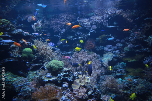 Fototapety, obrazy: Colorful fishes in the aquarium