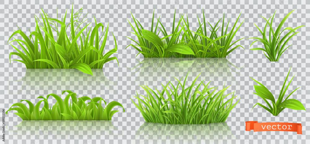 Fototapeta Spring, green grass. 3d realistic vector icon set