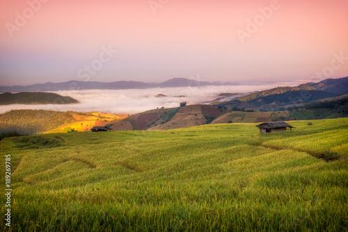 Fotobehang Rijstvelden Terraced Paddy Field in Mae-Jam Village , Chaingmai Province , Thailand