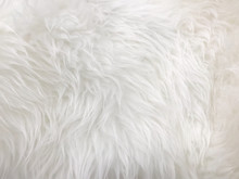 Synthetic Fur Color Texture Fo...