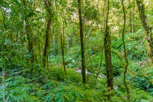 Fototapeten Wald Kew Mae Pan Nature Trail Trekking trail leading through jungle