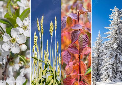 Collage of four seasons Tablou Canvas