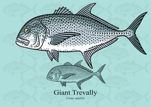 Giant Trevally (Giant Kingfish). Vector Illustration For Artwork In Small Sizes. Suitable For Graphic And Packaging Design, Educational Examples, Web, Etc.