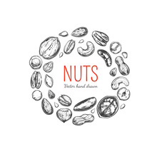 Nuts And Seeds Frame. Vector Hand Drawn Objects . Isolated On White. Modern Brushpen Calligraphy. Design Template