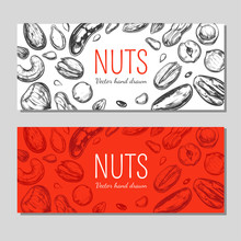 Nuts And Seeds Banners. Vector Hand Drawn Objects . Isolated On White. Modern Brushpen Calligraphy. Design Template