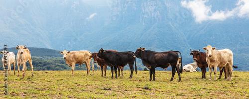 Fotografie, Obraz  Gado no pasto e montanha.