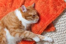 Red Cat Fell Ill