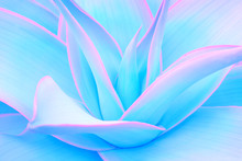 Agave Leaves In Trendy Pastel Neon Colors For Minimal Design Backgrounds
