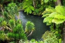 Tropical Garden On Monte Mount...