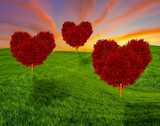 Fototapeta Natura - red heart-shaped trees on a spring field, concept of love and valentine's day