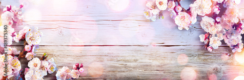 Photo sur Aluminium Retro Spring Banner - Pink Blossoms On Wooden Plank