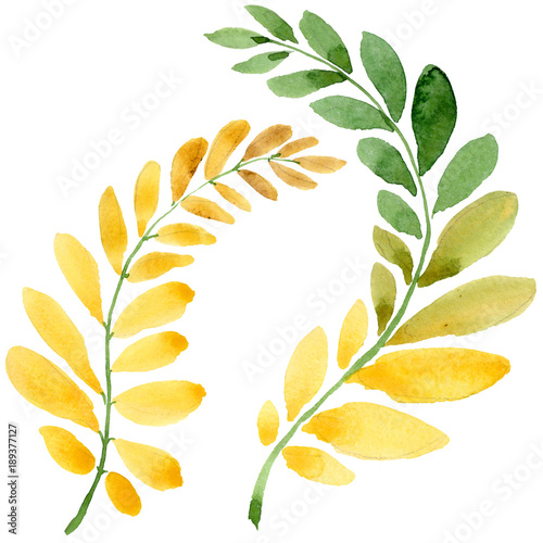Photo Autumn leaf of acacia in a hand drawn watercolor style isolated