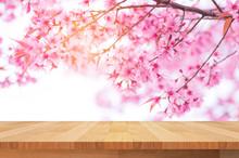 Wood Shelf On Beautiful Pink Flower Wild Himalayan Cherry Flower (Prunus Cerasoides) , Thai Cherry Blossom