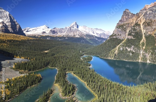 In de dag Khaki Panoramic Landscape View of Lake O'Hara and Distant Snowy Mountain Tops from Great Hiking Trail on Opabin Prospect in Yoho National Park, British Columbia Canada