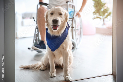 Cute service dog and blurred man in wheelchair, view through door