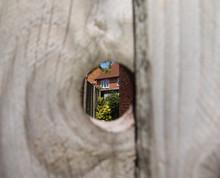 Peek Into The Back Garden