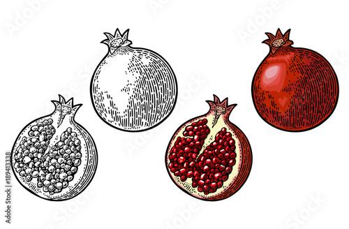 Fotografía  Whole and half garnet fruit with seed. Vector engraving