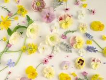 ナチュラルな春の花の...