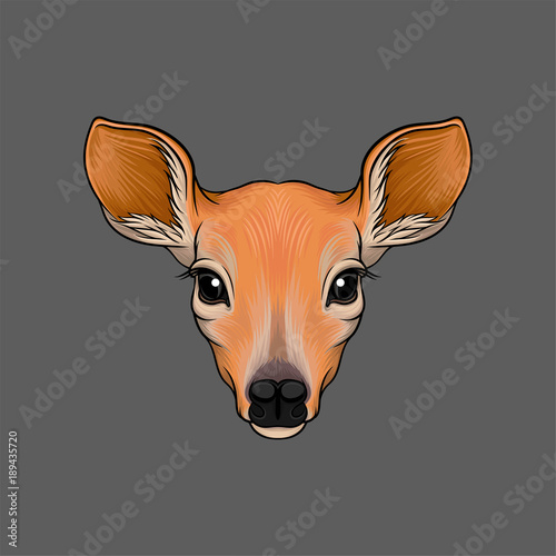 Head of roe deer, portrait of wild animal hand drawn vector Illustration Canvas Print