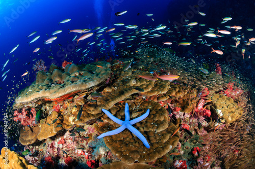 A starfish on a healthy, tropical coral reef at dawn Wallpaper Mural