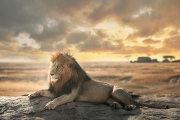 Veliki lav prirodnog parka Serengeti ostaje na vrhu