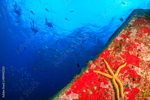 Poster Coral reefs A starfish on a colorful tropical coral reef with overhead SCUBA divers in silhouette