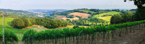Montage in der Fensternische Khaki Panorama of summer vineyards in Italy, Tuscany