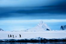 Penguins On An Iceshelf Having...