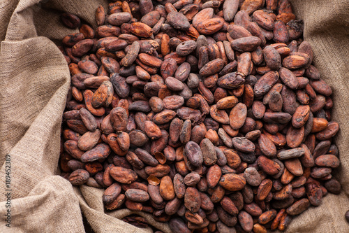 Raw cocoa beans in a sack