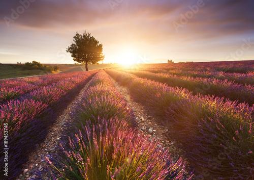 Garden Poster Lavender Champ de Lavande, Provence, France
