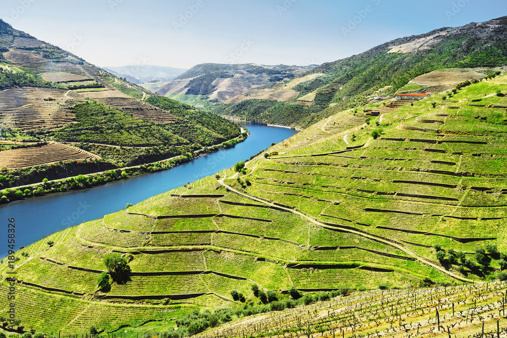Vineyards in Douro Valley, Portugal, Portuguese port wine