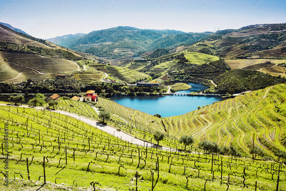 Fototapety, obrazy: Vineyards in the Valley of the River Douro, Portugal