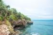 Coral ocean shore