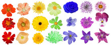 Set Of Rainbow Colors Blooms O...