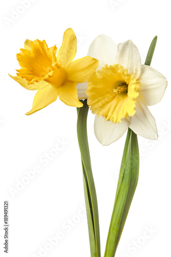Cadres-photo bureau Narcisse Pair of narcissus flower isolated on a white background