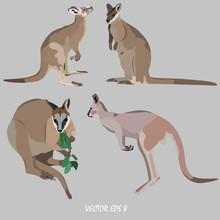 Four Kangaroos - The Gray Kang...