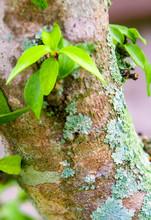 Beautiful Green Lichen, Moss A...