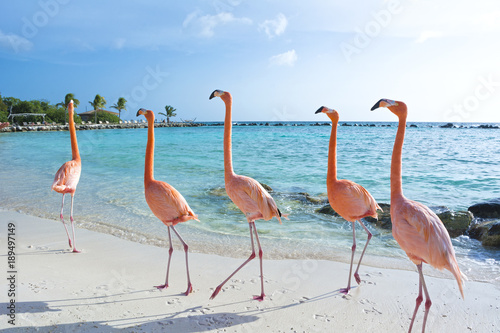 Foto op Aluminium Flamingo Pink flamingo, Aruba island