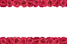 Pink Roses Arranged In Two Lin...