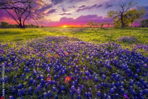 Foto op Plexiglas Weide, Moeras Sunrise in the Texas Hill Country