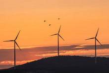 Beautiful Landscape With Silhouettes Of Three Wind Turbines On A Hill In The Sunset Light And Birds, Dobrogea, Romania