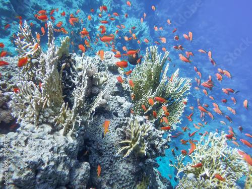 Zdjęcie XXL Podwodny świat morza