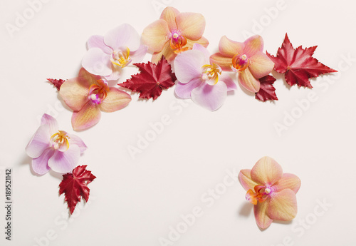 Tuinposter orchids on white background